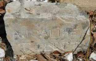 BLACKWOOD TOLLETT, ANGALINE - Howard County, Arkansas | ANGALINE BLACKWOOD TOLLETT - Arkansas Gravestone Photos
