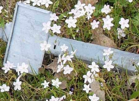 UNKNOWN, UNKNOWN - Lonoke County, Arkansas   UNKNOWN UNKNOWN - Arkansas Gravestone Photos