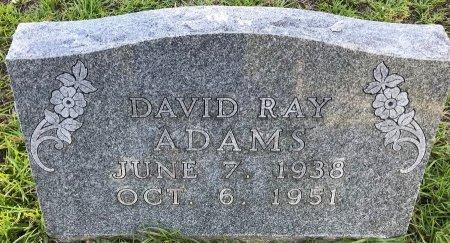 ADAMS, DAVID RAY - Miller County, Arkansas | DAVID RAY ADAMS - Arkansas Gravestone Photos