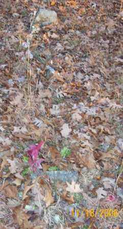 "EVANS FARMER, NANCY ""HAZELTINE"" - Newton County, Arkansas | NANCY ""HAZELTINE"" EVANS FARMER - Arkansas Gravestone Photos"