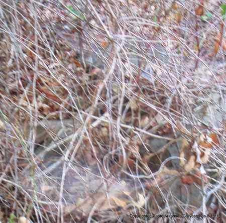 UNKNOWN, UNKNOWN - Scott County, Arkansas   UNKNOWN UNKNOWN - Arkansas Gravestone Photos