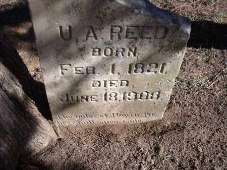 REED, U.A. - Washington County, Arkansas | U.A. REED - Arkansas Gravestone Photos