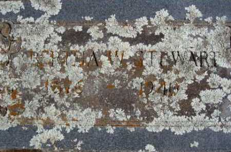 STEWART, BERTHA W. - Washington County, Arkansas   BERTHA W. STEWART - Arkansas Gravestone Photos