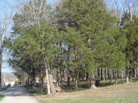 *SPRINGER CEMETERY VIEW,  - Boone County, Arkansas |  *SPRINGER CEMETERY VIEW - Arkansas Gravestone Photos