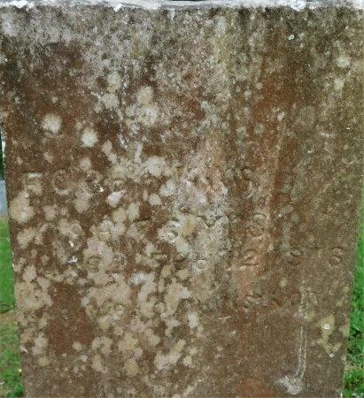 KING, FOEBY - Calhoun County, Arkansas   FOEBY KING - Arkansas Gravestone Photos