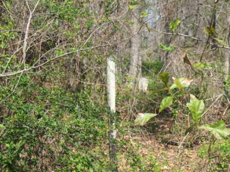 *MOUNT ZION CEMETERY OVERVIEW, . - Chicot County, Arkansas | . *MOUNT ZION CEMETERY OVERVIEW - Arkansas Gravestone Photos