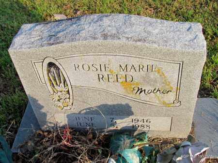 REED, ROSIE MARIE - Chicot County, Arkansas | ROSIE MARIE REED - Arkansas Gravestone Photos