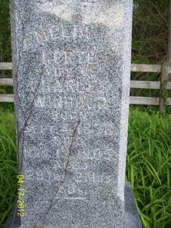 KORTE WINHOLD, AMELIA - Cass County, Illinois | AMELIA KORTE WINHOLD - Illinois Gravestone Photos