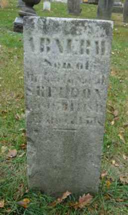 SHELDON, ABNER M. - DuPage County, Illinois | ABNER M. SHELDON - Illinois Gravestone Photos