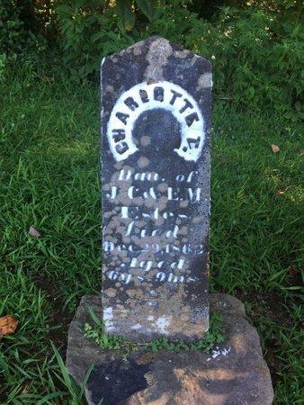 ESTES, CHARLOTTE T - Franklin County, Illinois   CHARLOTTE T ESTES - Illinois Gravestone Photos