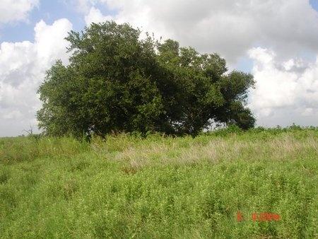 * OVERVIEW (NORTH),  - Cameron County, Louisiana    * OVERVIEW (NORTH) - Louisiana Gravestone Photos