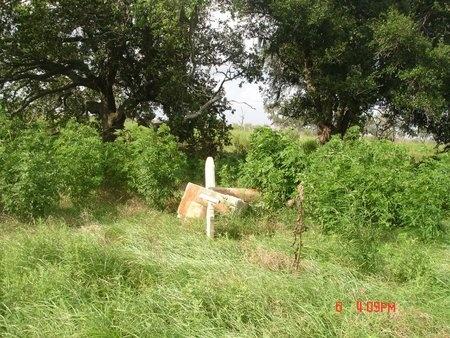 *OVERVIEW,  - Cameron County, Louisiana |  *OVERVIEW - Louisiana Gravestone Photos