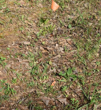 UNKNOWN, 16 - Webster County, Louisiana | 16 UNKNOWN - Louisiana Gravestone Photos