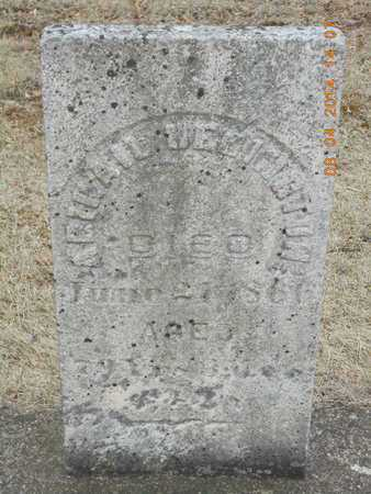 HERINGTON, ABIGAIL - Branch County, Michigan | ABIGAIL HERINGTON - Michigan Gravestone Photos