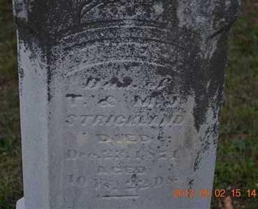 STRICKLAND, MINNIE J. - Hillsdale County, Michigan   MINNIE J. STRICKLAND - Michigan Gravestone Photos