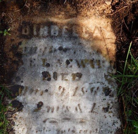 SEWARD, BIRDELLA - Kalamazoo County, Michigan   BIRDELLA SEWARD - Michigan Gravestone Photos