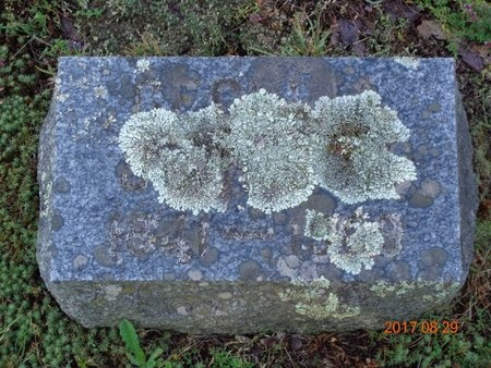 JOHNSON, CECELIA - Marquette County, Michigan   CECELIA JOHNSON - Michigan Gravestone Photos