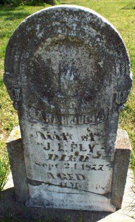 BRACKET FLY, SARAH JULIA - Barry County, Missouri | SARAH JULIA BRACKET FLY - Missouri Gravestone Photos