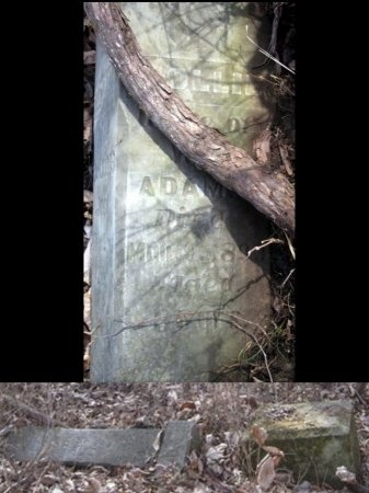 "ADAMS, MARY ""MOLLIE"" - Chariton County, Missouri | MARY ""MOLLIE"" ADAMS - Missouri Gravestone Photos"