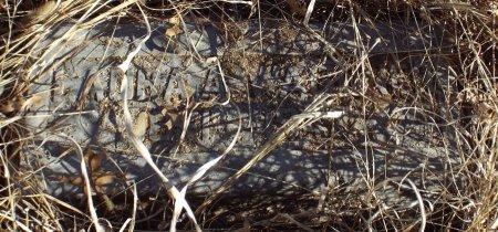 WAGONER, LAURA ANN - Jasper County, Missouri   LAURA ANN WAGONER - Missouri Gravestone Photos