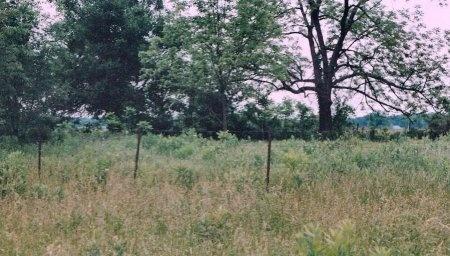 *, LOCATION PHOTO 3 - Newton County, Missouri | LOCATION PHOTO 3 * - Missouri Gravestone Photos