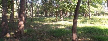 SMITH, MARGARET A - Newton County, Missouri | MARGARET A SMITH - Missouri Gravestone Photos