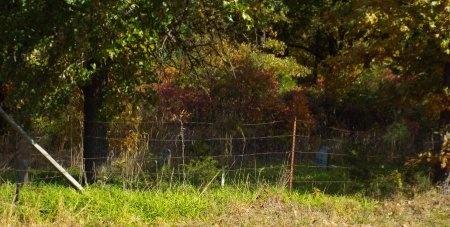 ALLEN, JULIA - Newton County, Missouri | JULIA ALLEN - Missouri Gravestone Photos