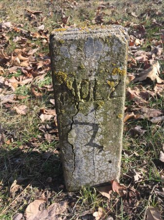 MOLZ, VERNIE - Stone County, Missouri | VERNIE MOLZ - Missouri Gravestone Photos