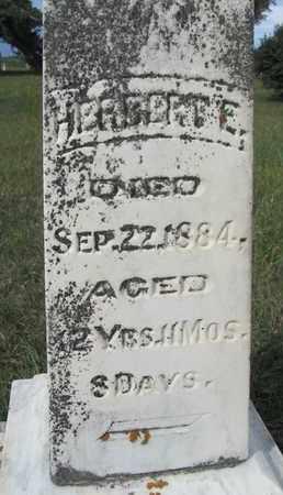 FESTER, HERBERT - Buffalo County, Nebraska | HERBERT FESTER - Nebraska Gravestone Photos