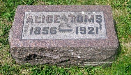WEDDLE TOMS, ALICE - Lucas County, Ohio   ALICE WEDDLE TOMS - Ohio Gravestone Photos