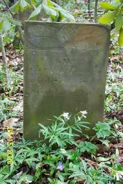 THOMPSON, ANGELINE - Shelby County, Ohio | ANGELINE THOMPSON - Ohio Gravestone Photos