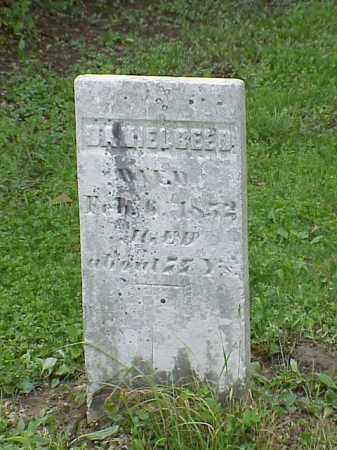 REED, DANIEL - Union County, Ohio   DANIEL REED - Ohio Gravestone Photos