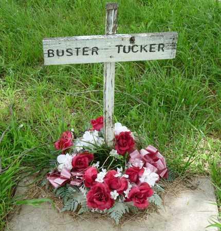 TUCKER, BUSTER - Tulsa County, Oklahoma | BUSTER TUCKER - Oklahoma Gravestone Photos