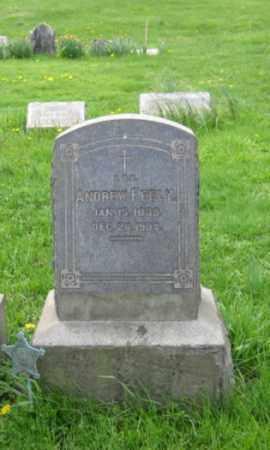 FEELY, ANDREW - Bucks County, Pennsylvania | ANDREW FEELY - Pennsylvania Gravestone Photos