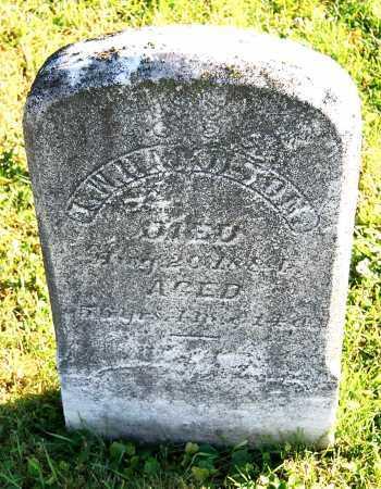 HAMILTON, T. W. - Juniata County, Pennsylvania | T. W. HAMILTON - Pennsylvania Gravestone Photos