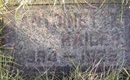 HAIDER, ANTOINETTE - Codington County, South Dakota | ANTOINETTE HAIDER - South Dakota Gravestone Photos