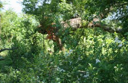 BURDETT, NANCY JANE - Bledsoe County, Tennessee | NANCY JANE BURDETT - Tennessee Gravestone Photos