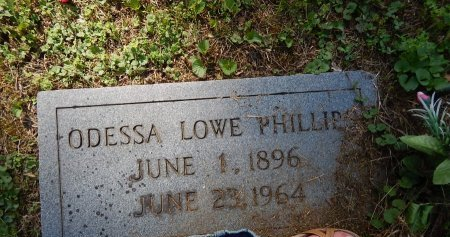 PHILLIPS, ODESSA - Campbell County, Tennessee | ODESSA PHILLIPS - Tennessee Gravestone Photos