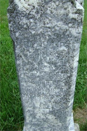 ELKINS, CLAUDE P. - Cannon County, Tennessee | CLAUDE P. ELKINS - Tennessee Gravestone Photos