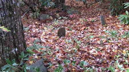 *HANNER FISH CEMETERY OVERVIER, . - Cocke County, Tennessee | . *HANNER FISH CEMETERY OVERVIER - Tennessee Gravestone Photos