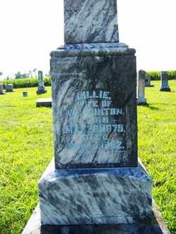WINTON, LILLIE - Coffee County, Tennessee | LILLIE WINTON - Tennessee Gravestone Photos