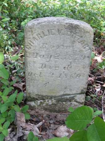 COZART, CHARLIE V. - Hamblen County, Tennessee   CHARLIE V. COZART - Tennessee Gravestone Photos