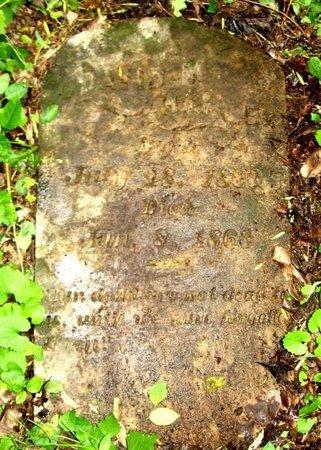HARLE, DAVID M. - Hamblen County, Tennessee | DAVID M. HARLE - Tennessee Gravestone Photos
