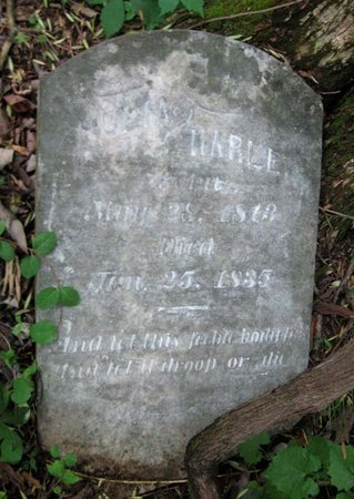 HARLE, JULIA - Hamblen County, Tennessee | JULIA HARLE - Tennessee Gravestone Photos