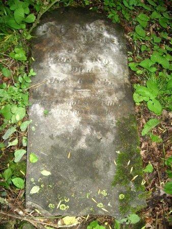 HARLE, LEONARD (DR.) - Hamblen County, Tennessee   LEONARD (DR.) HARLE - Tennessee Gravestone Photos