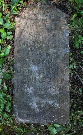 MOORE, WILLIE - Hamblen County, Tennessee | WILLIE MOORE - Tennessee Gravestone Photos