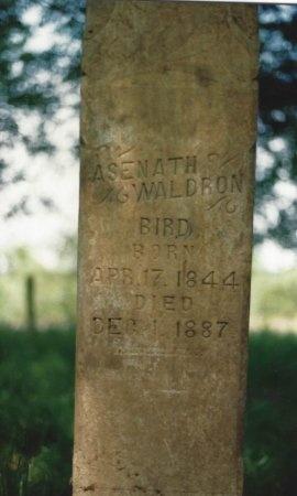 BIRD, ASENATH - Knox County, Tennessee | ASENATH BIRD - Tennessee Gravestone Photos