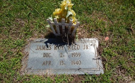 REED, JAMES ROY JR - Knox County, Tennessee   JAMES ROY JR REED - Tennessee Gravestone Photos