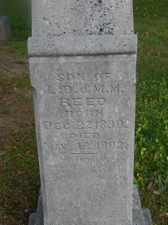 REED, SOLLIE L - Knox County, Tennessee   SOLLIE L REED - Tennessee Gravestone Photos