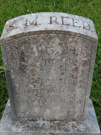 REED, SAMUEL MACK - Knox County, Tennessee   SAMUEL MACK REED - Tennessee Gravestone Photos
